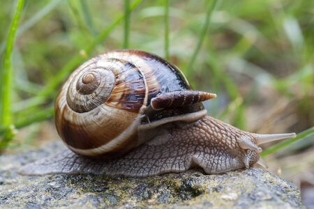 dodgers: Snail with dodgers