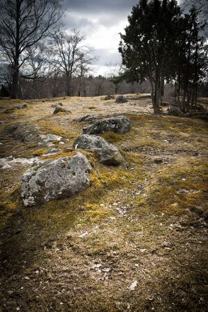Stone and tree on a field in Sweden Stock Photo - 9747216