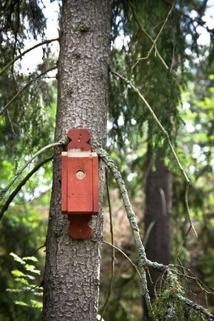 A nesting box on a tree in the woods