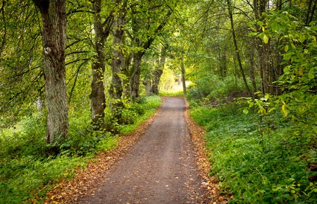 A gravel path in the middle of a forest Stock Photo