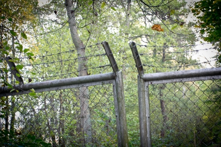 A fence in the forest with barbered wire photo