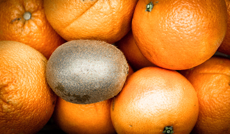 A kiwi that is isolated on some oranges
