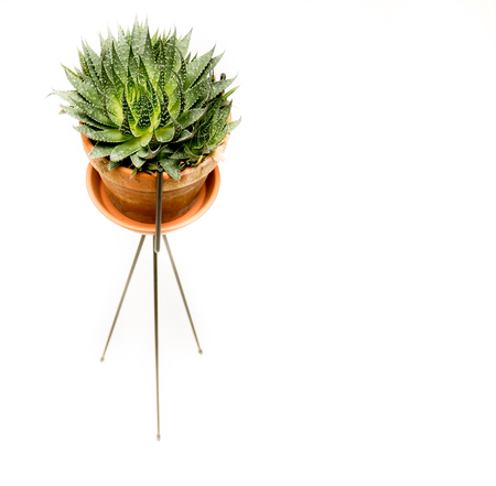 One brown pot isolated on white background with green flower inside