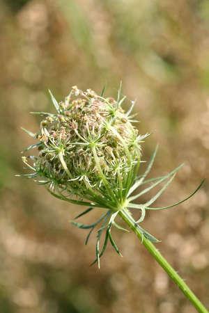 花の前にヘムロック