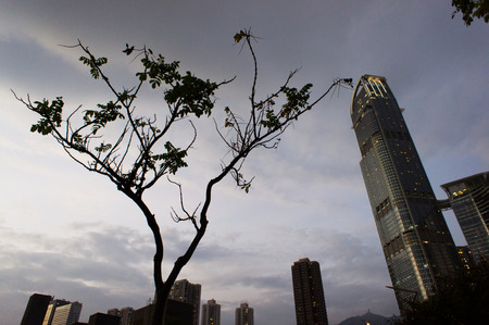 contradict: Lonely tree with skyscraper, Tsuen Wan, Hong Kong, China Stock Photo