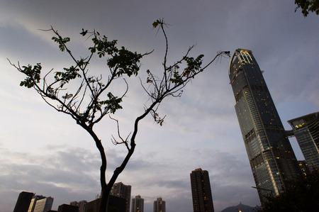 contradict: Lonely tree with skyscraper, Tsuen Wan, Hong Kong, China Stock Photo