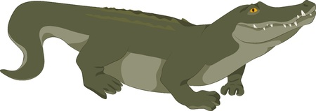 caiman: illustration of a realistic green crocodile Illustration