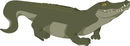 illustration of a realistic green crocodile Illustration