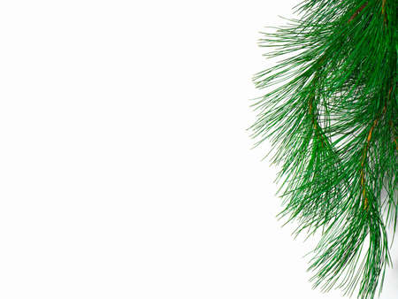 The branch of a christmas tree on white background photo