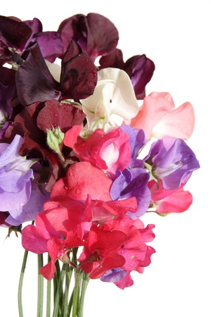 sweet pea: wet bouquet of sweet pea flowers