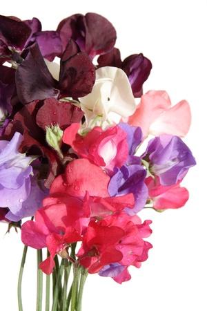wet bouquet of sweet pea flowers