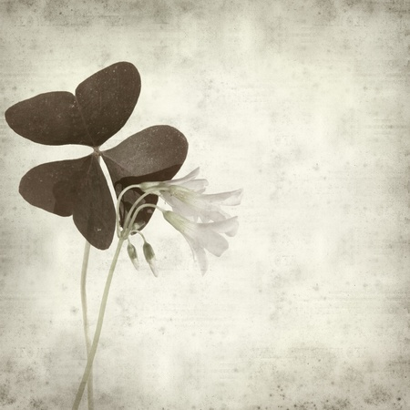 brown wallpaper: textured old paper background with oxalis flowers and leaves;