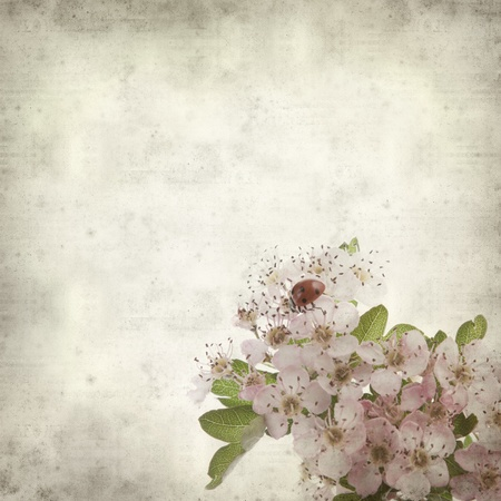 textured old paper background with hawthorn flowers