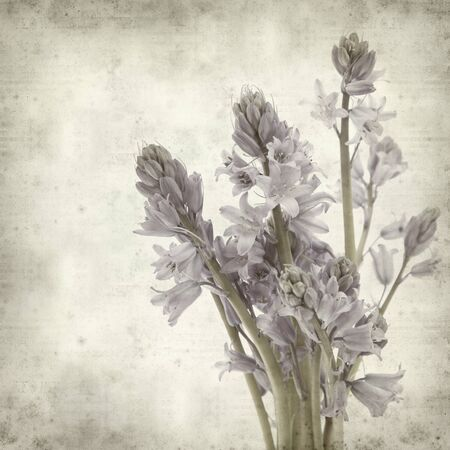 textured old paper background with bluebells (hyacinthoides) photo