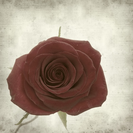 textured old paper background with single perfect red rose