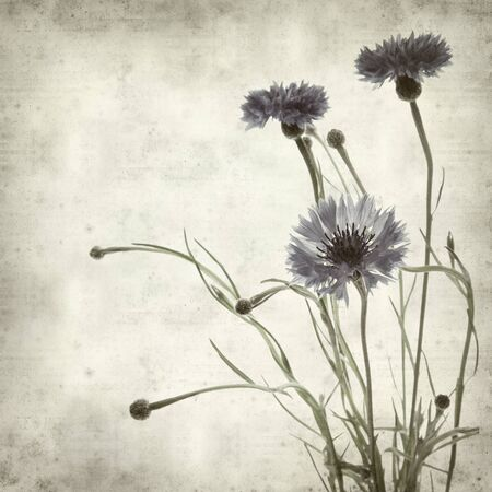 cornflower: textured old paper background with cornflower Stock Photo