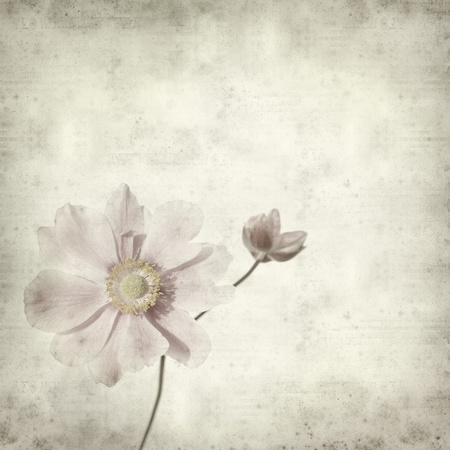 textured old paper background with pale pink japanese anemone branch