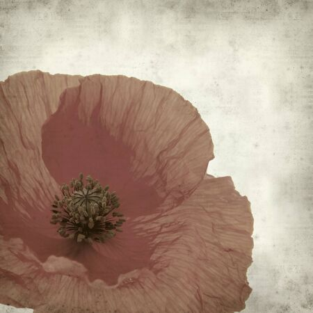 textured old paper background with red poppy flower Stock Photo - 9764560