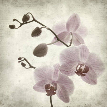 textured old paper background with pink phalaenopsis;