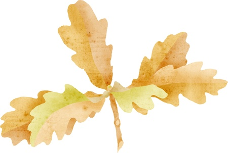 oak leaves cluster, e- collage with paper texture photo