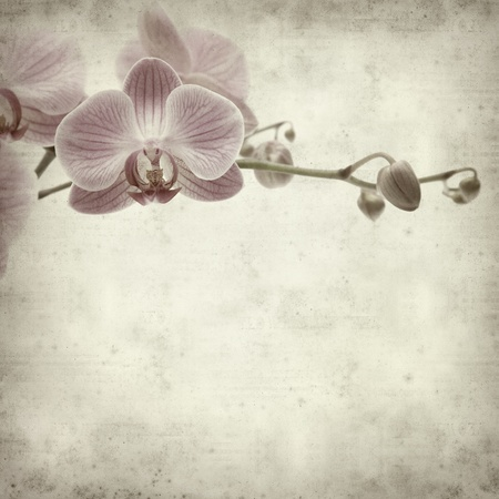 textured old paper background with pink stripy phalaenopsis orchid