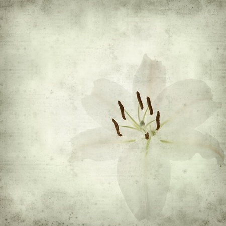 textured old paper background with white lily