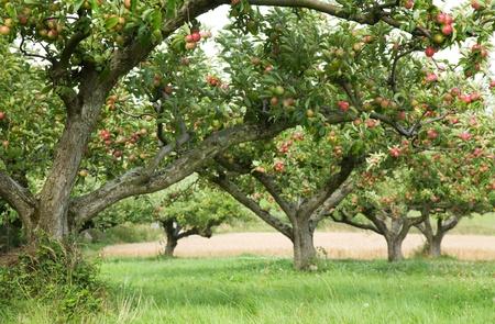 Apfelgarten Hintergrund