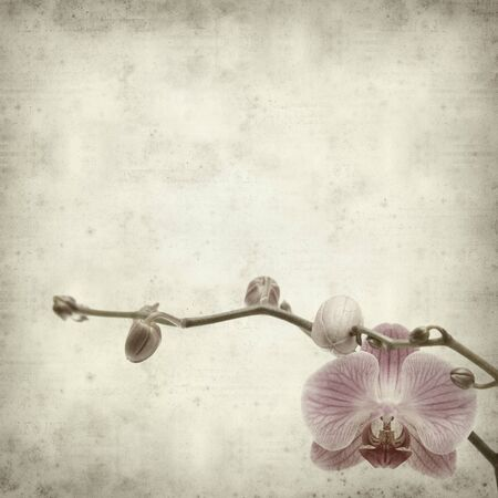 textured old paper background with pink phaleonopsis orchid flower photo