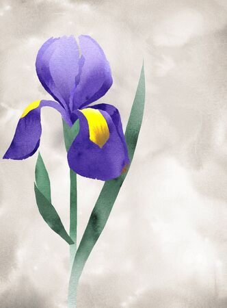 Purple iris collage with, hand line drawing,  watercolor doodle fragments, background of watercolor doodle Stock Photo - 10509982