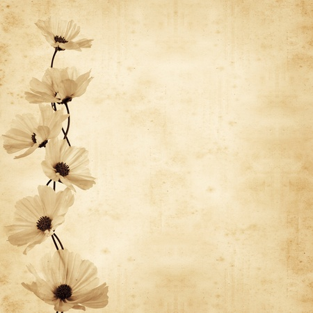 old, paper, background ,cosmea