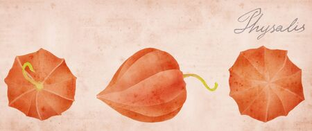 physalis border on old paper background photo