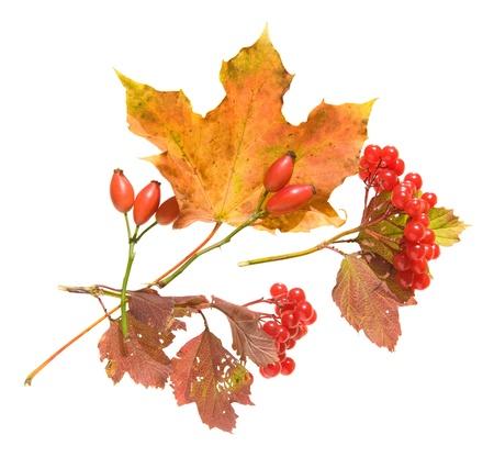 yeloow: autumn arrangement