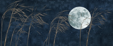 old paper background with grass stalk and full moon photo