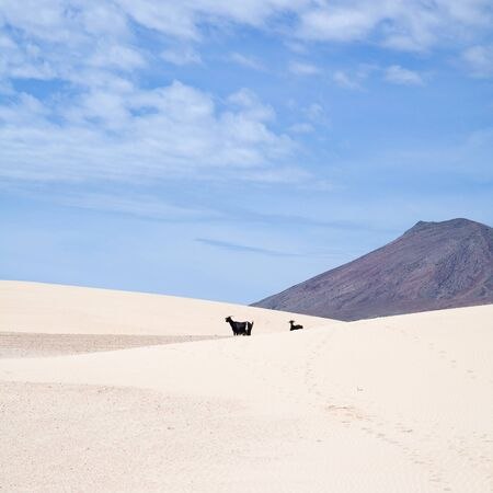 Fuerteventura, Canary Islands, natural reserve  photo