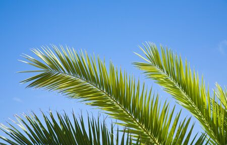 palm leaves against blue sky photo