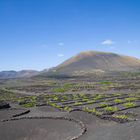 La Geria - vineyard reagin of Lanzarote; Canary Islands; grape vines grow in small walled craters in black volcanic ash; volcanoes of Timanfaya in the background photo