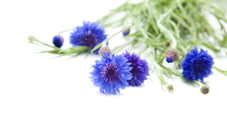 bachelor s button: bunch of cornflowers Stock Photo
