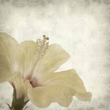 textured old paper background with  yellow hibiscus flower photo