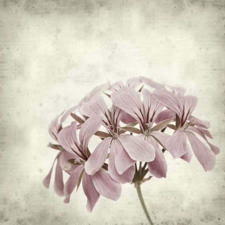 textured old paper background with pink geranium photo