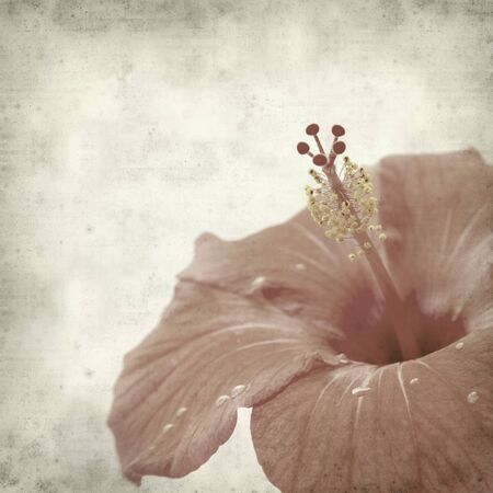 textured old paper background with red hibiscus photo