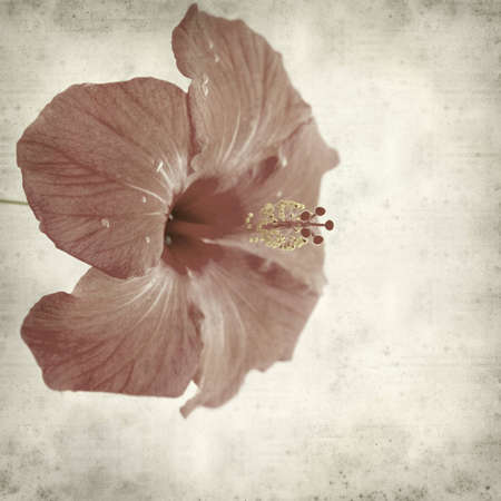textured old paper background with red hibiscus Stock Photo - 12794731