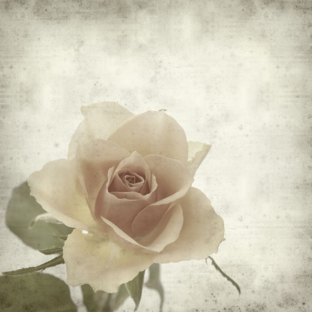 textured old paper background with single orange rose 版權商用圖片 - 12794970