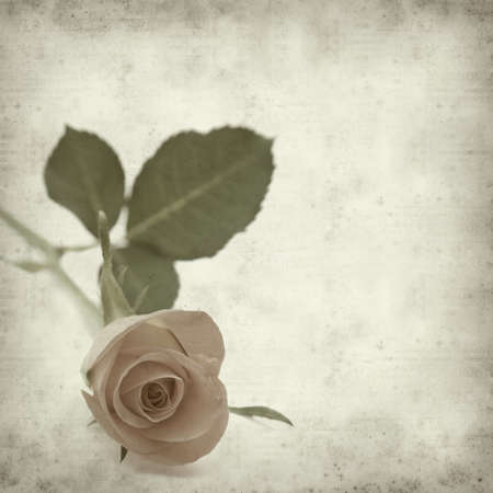 textured old paper background with single orange rose Stock Photo - 12794964