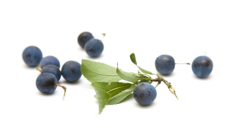 Prunus spinosa  blackthorn; sloe  scattered berries isolated on white background photo