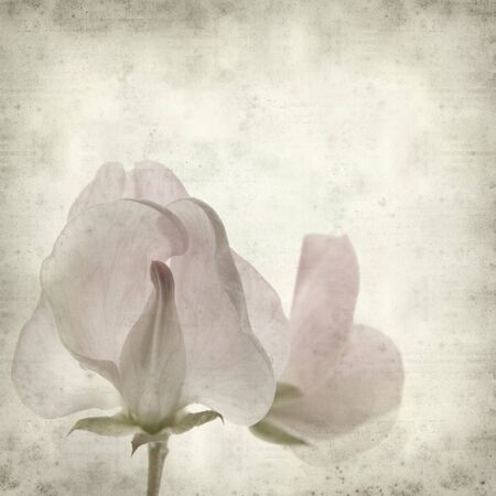 textured old paper background with sweet pea  photo