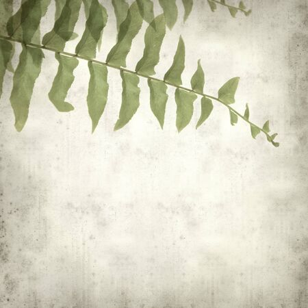 textured old paper background with fern leaf Stock Photo - 13592648