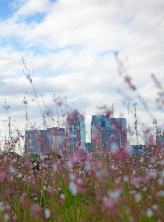finacial: London Canary Wharf, seen through the flowers on the foreground Editorial