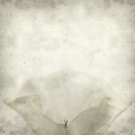 textured old paper background with dature flower Stock Photo