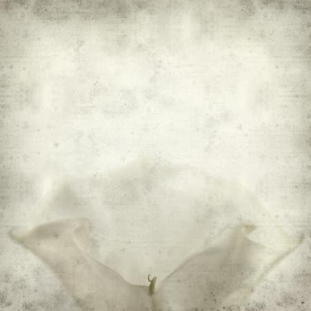 textured old paper background with dature flower Standard-Bild