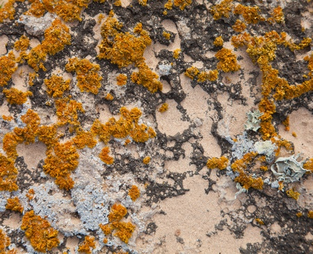 photosynthetic: natural background of sand, stone and lichens Stock Photo